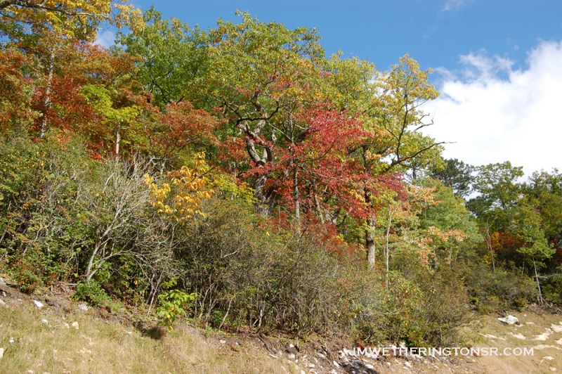 2013_10_06_sheepback_mountain_leaves_changing_08