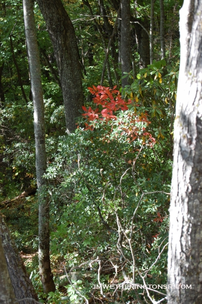 2013_10_06_sheepback_mountain_leaves_changing_10