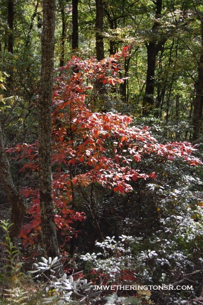 2013_10_06_sheepback_mountain_leaves_changing_17