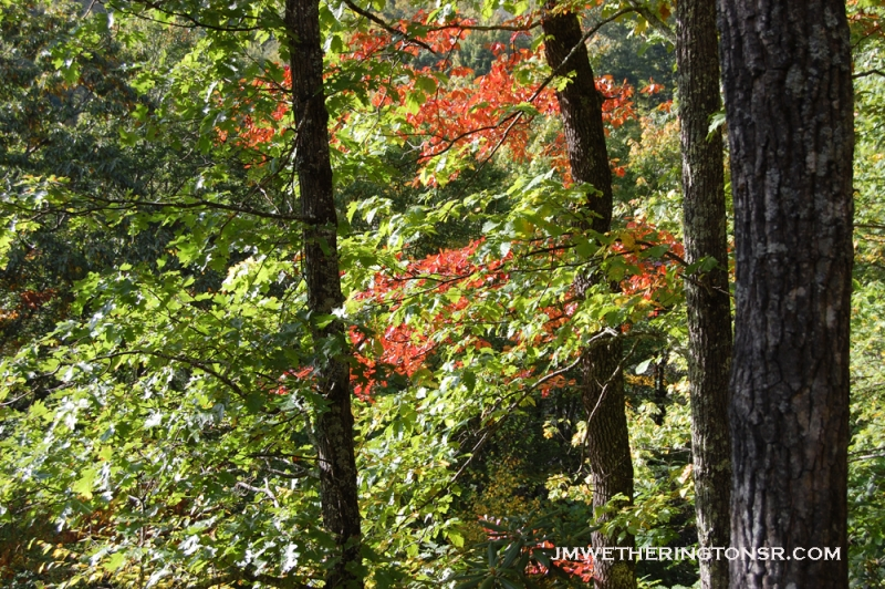 2013_10_06_sheepback_mountain_leaves_changing_19