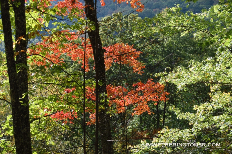 2013_10_06_sheepback_mountain_leaves_changing_21