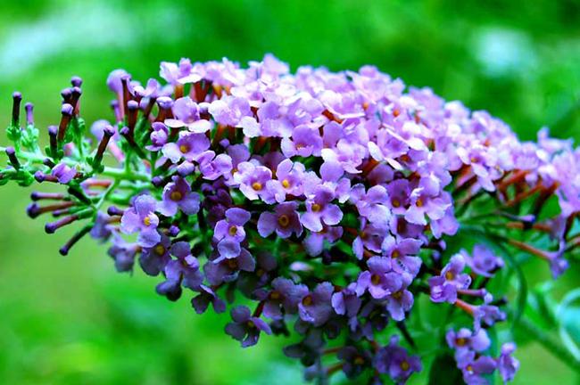Flower at Oconaluftee Gardens in Cherokee, NC