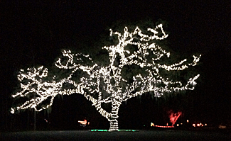Light Up The Wild at Moss Park - J M Wetherington Sr