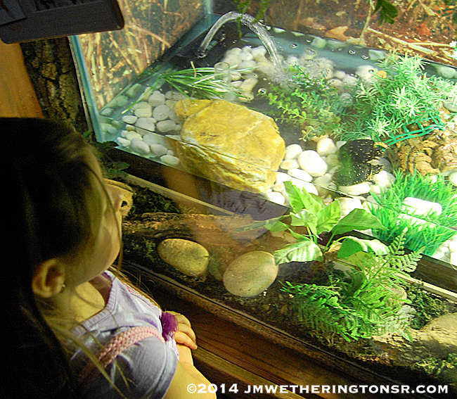 Abby watching the box turtles.