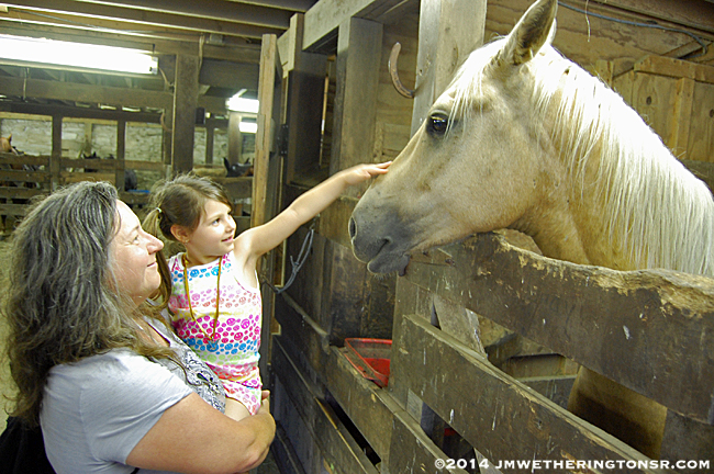 In the stable, Abby got to pet several of the horses.