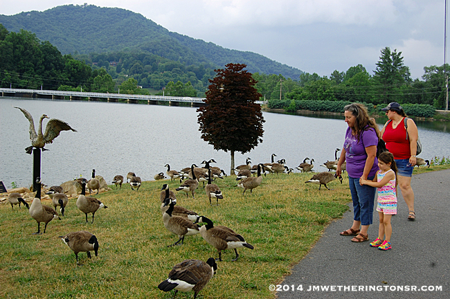 """Cindy, Abby and Amber come across a flock of geese who appear to be worshipping the statue of """"Malcolm"""", Lake Junaluska's First Swan.  They were leaving offerings of defecation all over the place."""