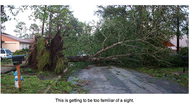 Trees uprooted by Hurricane Charley blocking street.