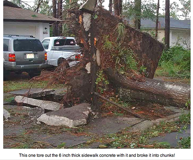 Hurricane Charley uprooted this tree which broke up the sidewalk.