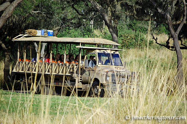 Disney Animal Kingdom Safari truck