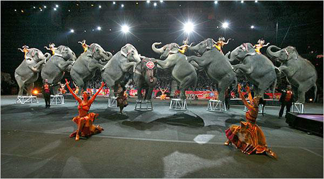 Elephants performing in circus