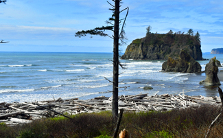 Looking out from the trail to Ruby Beach.
