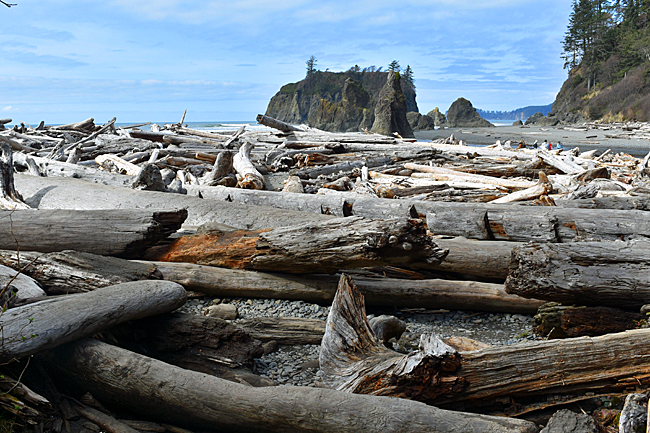 Drift logs on Ruby Beach