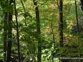 2013_10_06_sheepback_mountain_leaves_changing_01