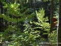2013_10_06_sheepback_mountain_leaves_changing_02