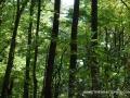 2013_10_06_sheepback_mountain_leaves_changing_03