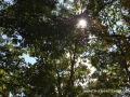 2013_10_06_sheepback_mountain_leaves_changing_06