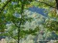 2013_10_06_sheepback_mountain_leaves_changing_07