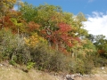 2013_10_06_sheepback_mountain_leaves_changing_08