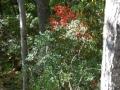 2013_10_06_sheepback_mountain_leaves_changing_10