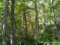 2013_10_06_sheepback_mountain_leaves_changing_11