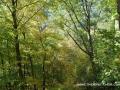 2013_10_06_sheepback_mountain_leaves_changing_13