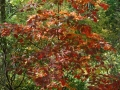 2013_10_06_sheepback_mountain_leaves_changing_15