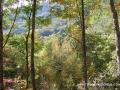 2013_10_06_sheepback_mountain_leaves_changing_16
