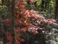 2013_10_06_sheepback_mountain_leaves_changing_17