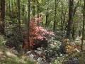 2013_10_06_sheepback_mountain_leaves_changing_18