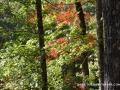 2013_10_06_sheepback_mountain_leaves_changing_19