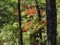 2013_10_06_sheepback_mountain_leaves_changing_20